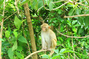 Spotting Wildlife On Monkey Mountain Jeep Tours VJT Adventures
