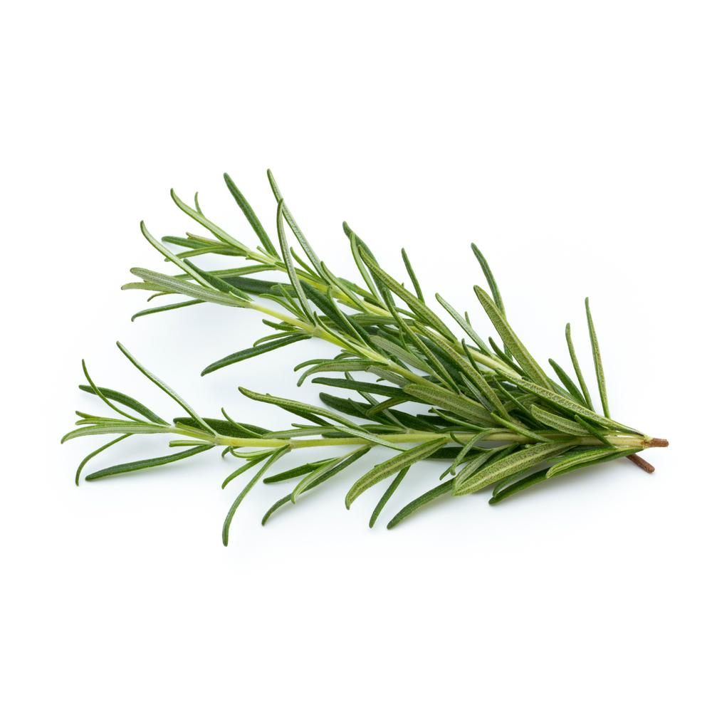 Perfume oil inspired by Rosemary