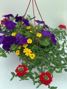 Suspensions Mix plantes 23cm