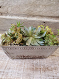 "SUCCULENT ASSORTMENT 10"" RECTANGULAR BREAD PAN"