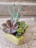 SUCCULENT ASSORTMENT 4'' X 4'' LISBON CUBE POTTERY, ASST DESIGNS