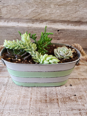 SUCCULENT ASSORTMENT 7.75'' X 3.5'' OVAL TIN, COLOR STRIPE, ROPE HANDLE