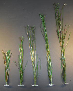 Eelgrass 5 mm