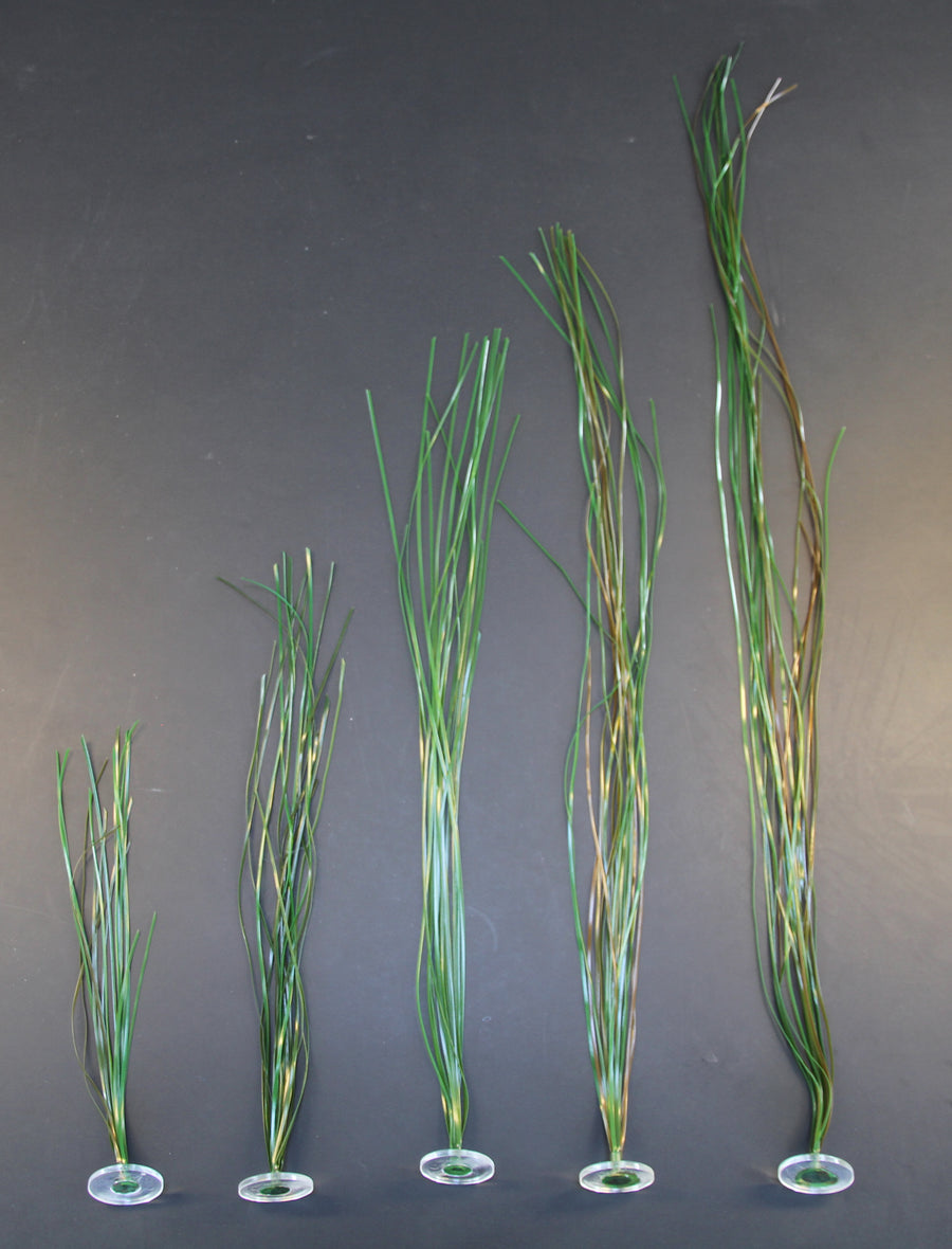 Surf Grass 2-3 mm