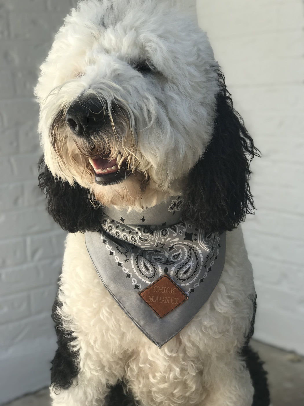 CHICK MAGNET PET BANDANA