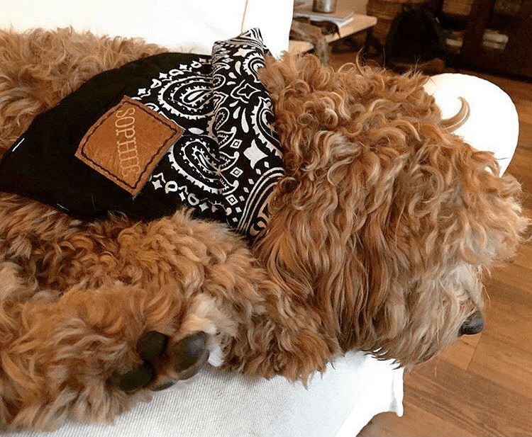 CUSTOM PET BANDANA
