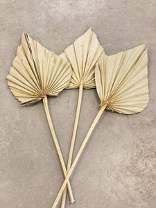 Set of 3 Dried Palm Spears