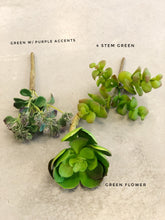 Load image into Gallery viewer, Assorted Succulents