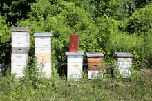 Load image into Gallery viewer, Fifth Town - Local Prince Edward County Honey - Various Styles