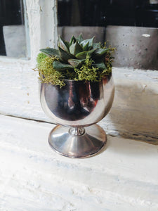 Succulent in Vintage Silver