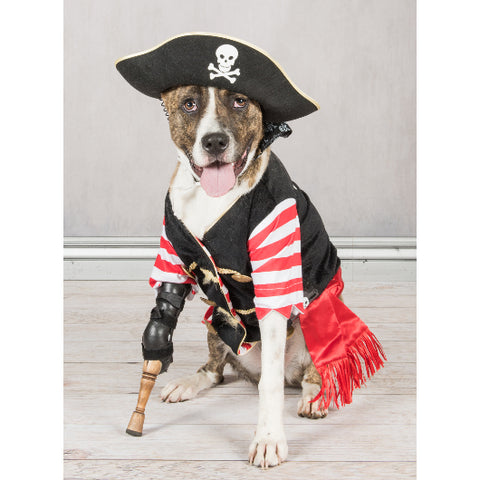 Keating, pirate dog born without a leg, wearing his official pegleg made from Willow wood by Miller Prosthetics & Orthotics