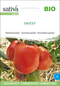 Tomate / Buschtomate/Saucey
