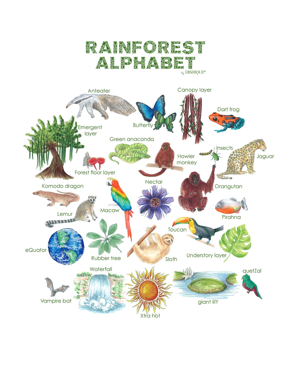 Rainforest Alphabet Wall Art