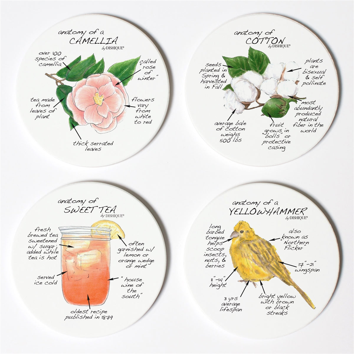 Alabama Anatomy Coaster Set