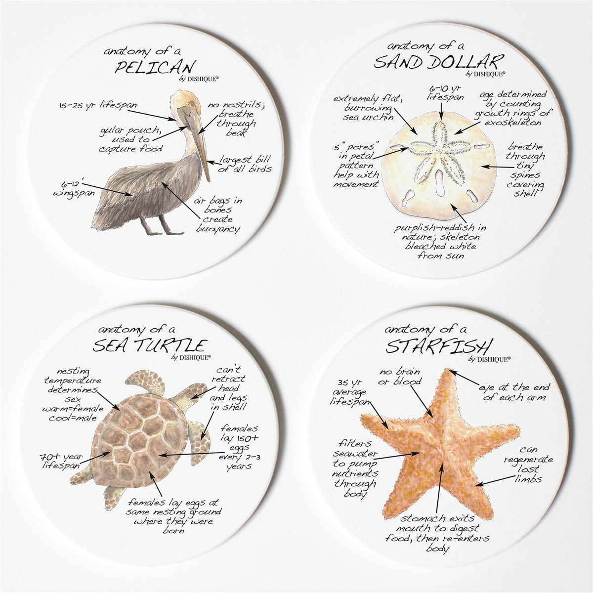 Beach Life Anatomy Coaster Set