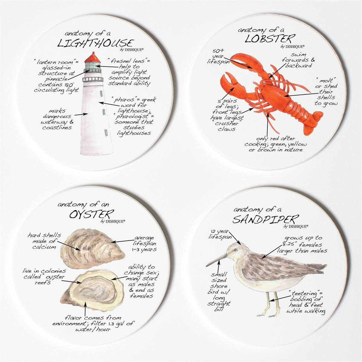 Coastal Life Anatomy Coaster Set
