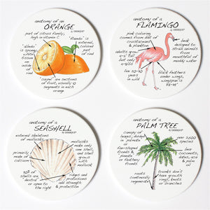Florida Anatomy Coaster Set