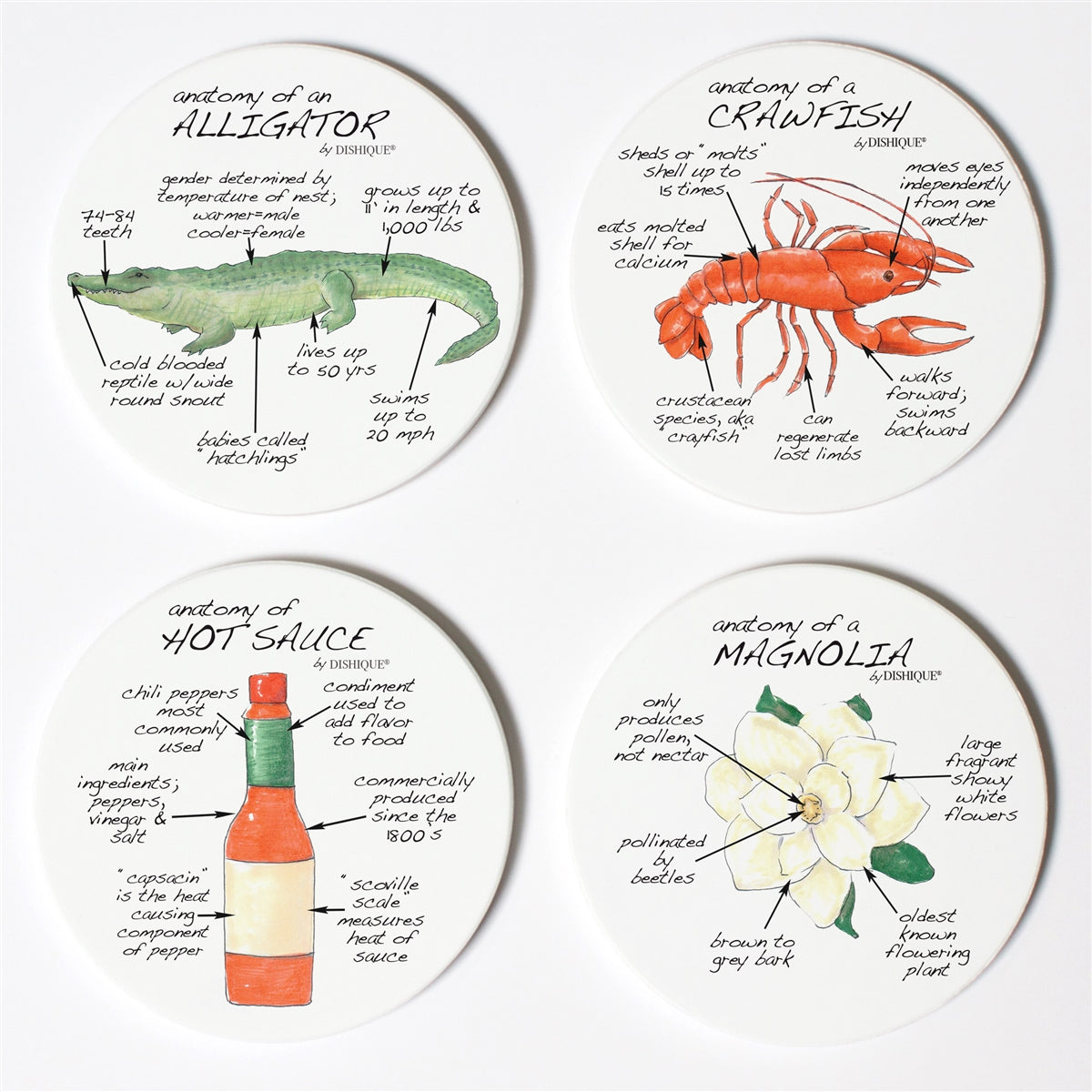 Louisiana Anatomy Coaster Set