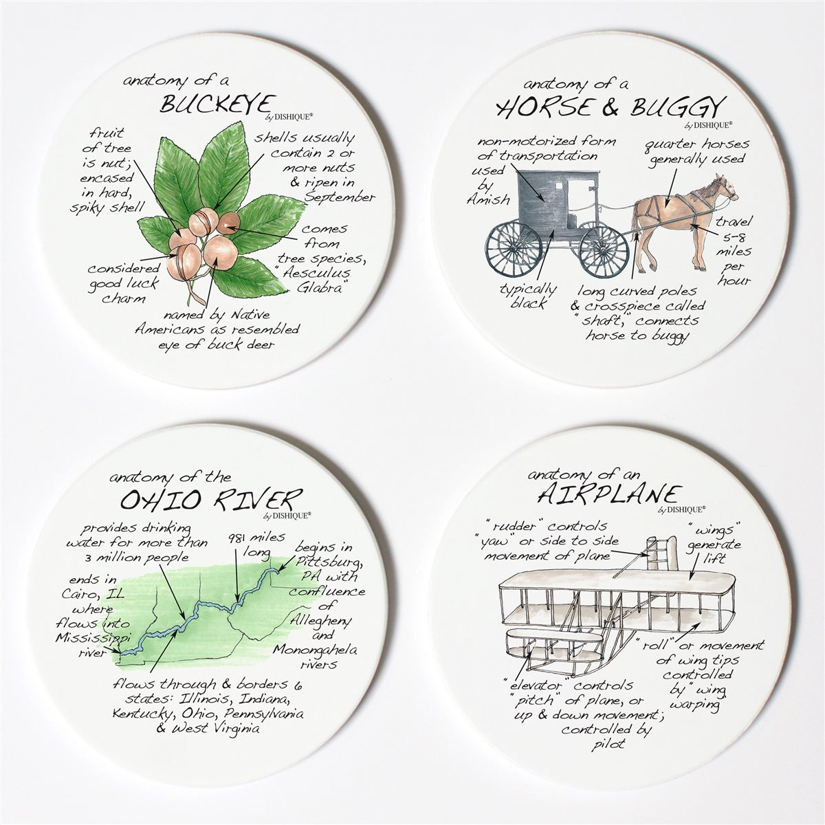 Ohio Anatomy Coaster Set