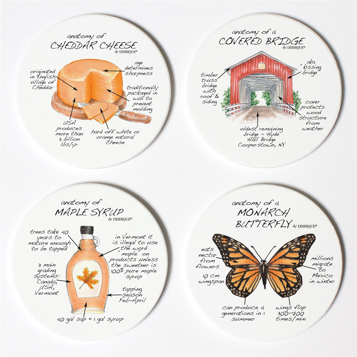 Vermont Anatomy Coaster Set