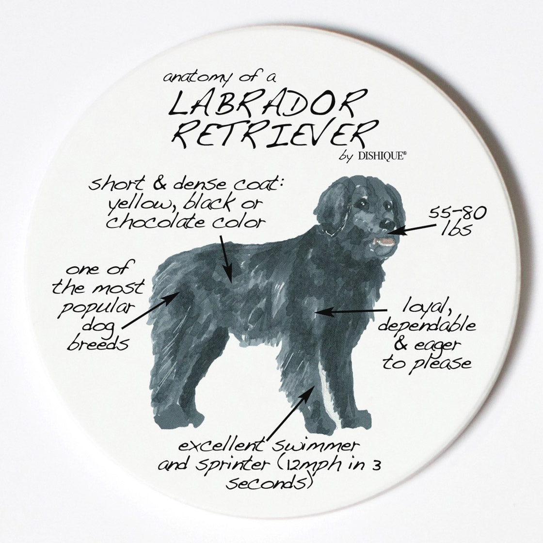 Individual Coaster - Dog Breed Gifts - Labrador Retriever