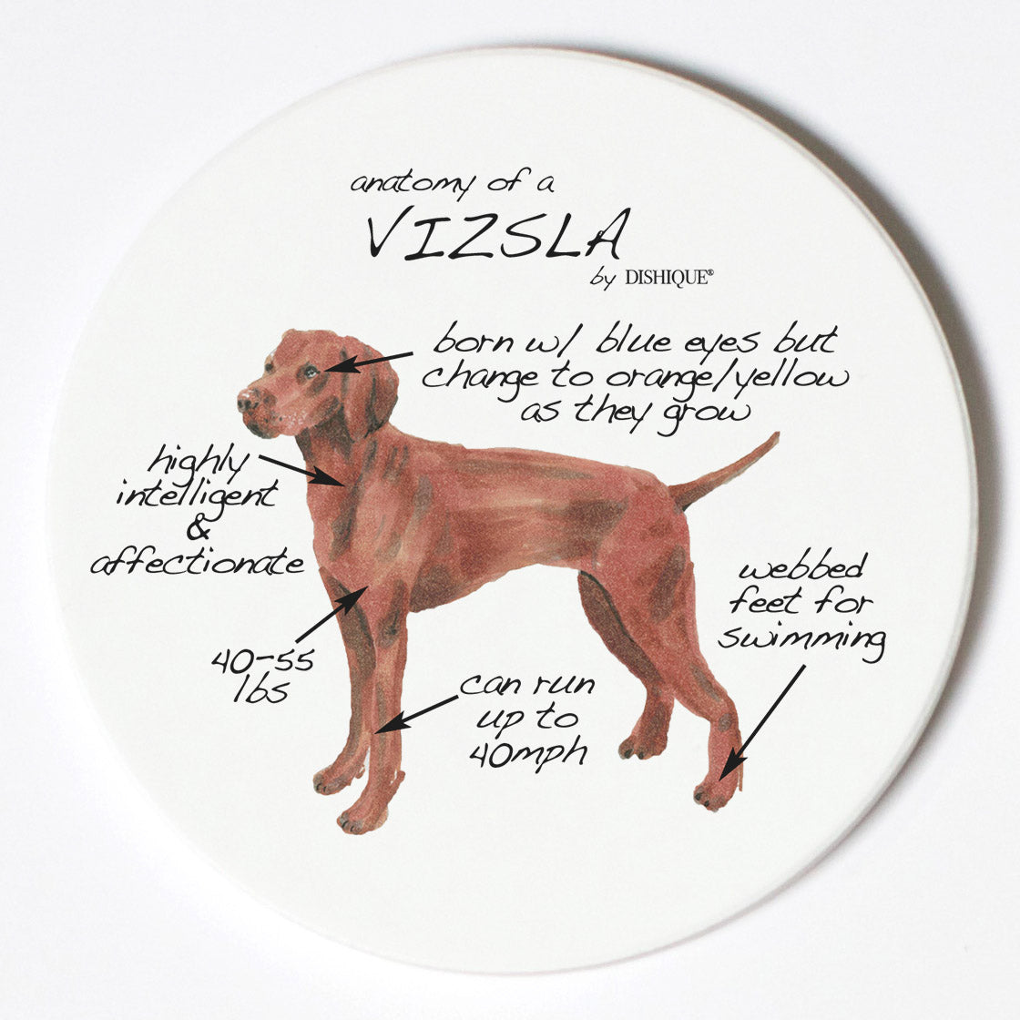 Individual Coaster - Dog Breed Gifts - Vizsla