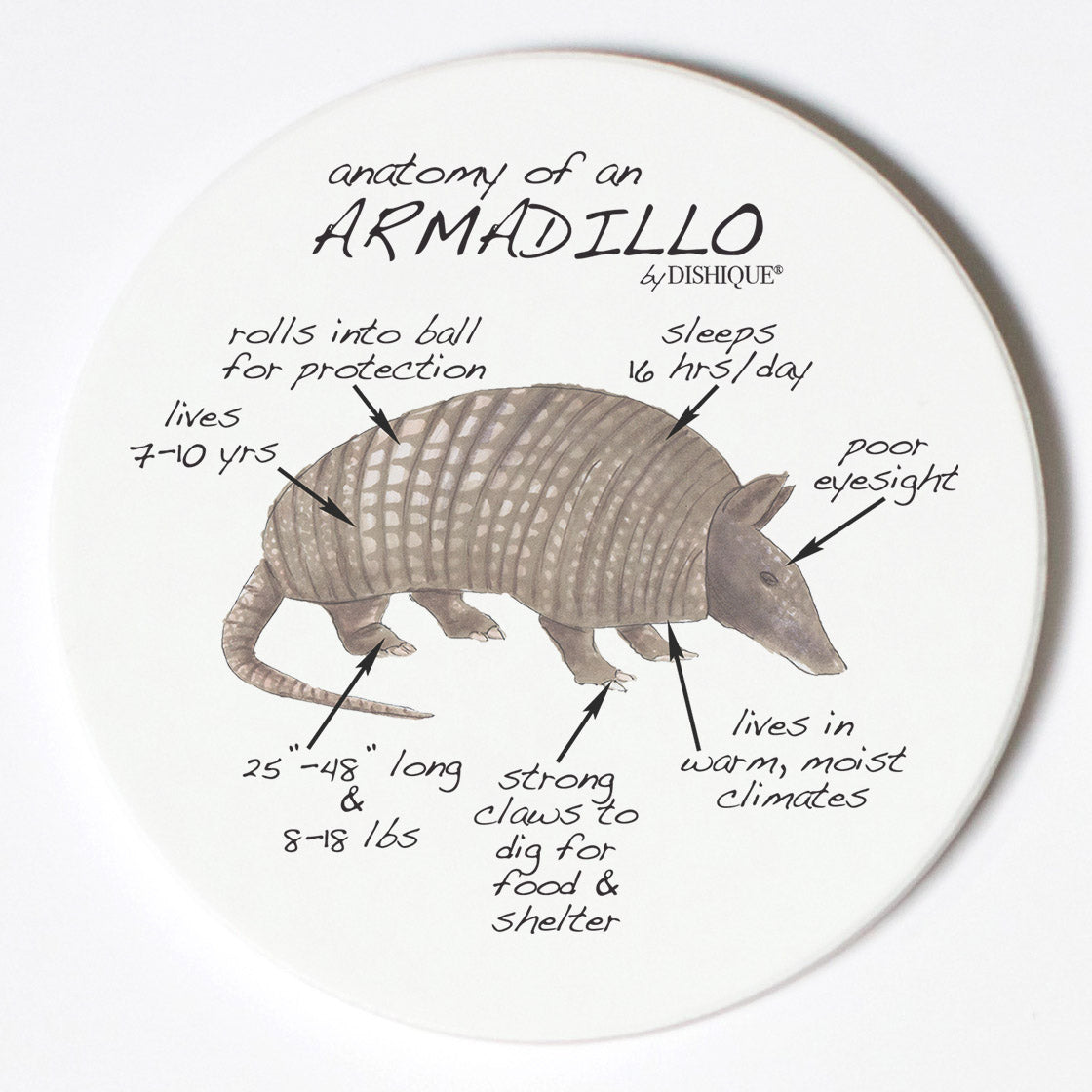 Individual Coasters - Animals & Insects - Armadillo