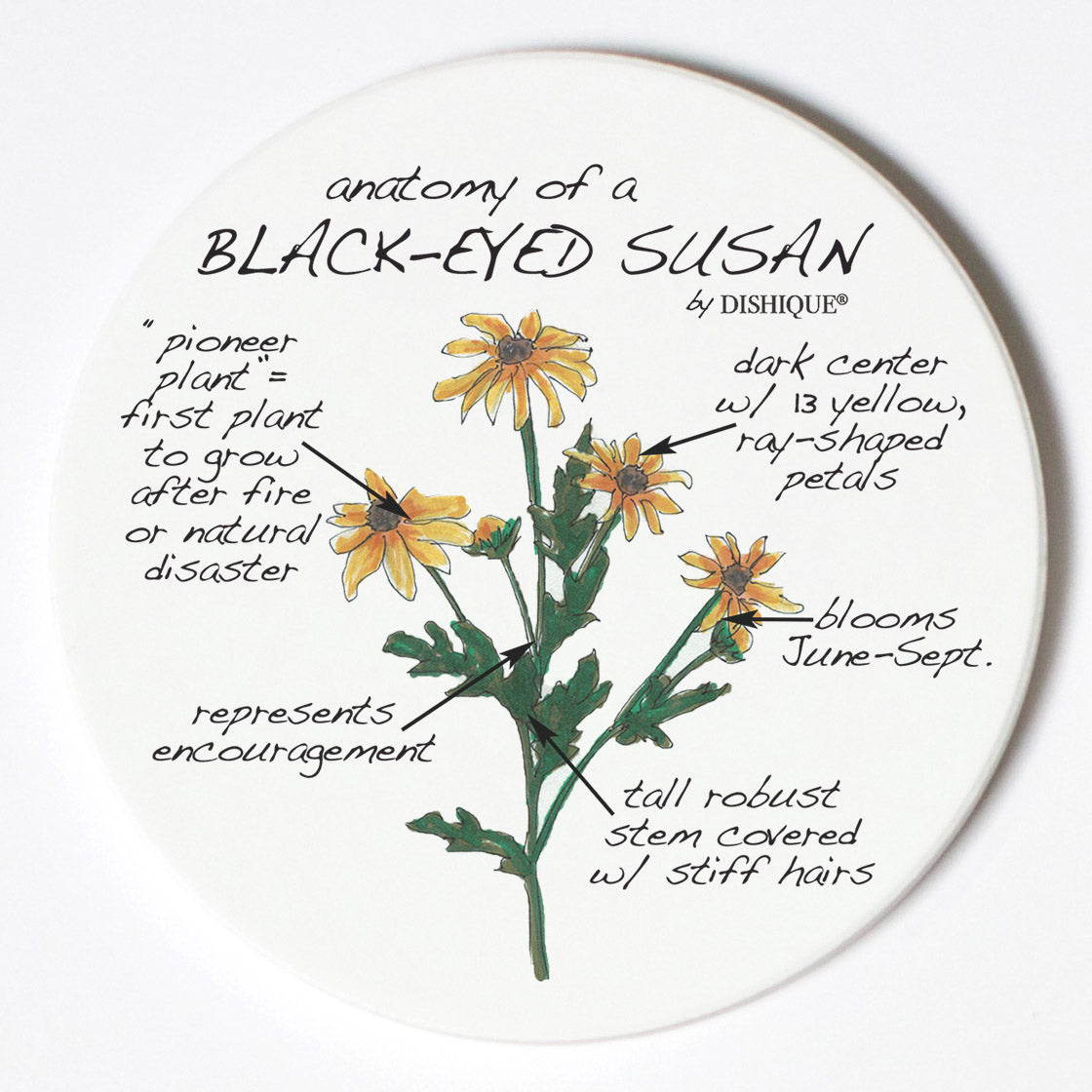 Individual Coasters - Plants - Black Eyed Susan
