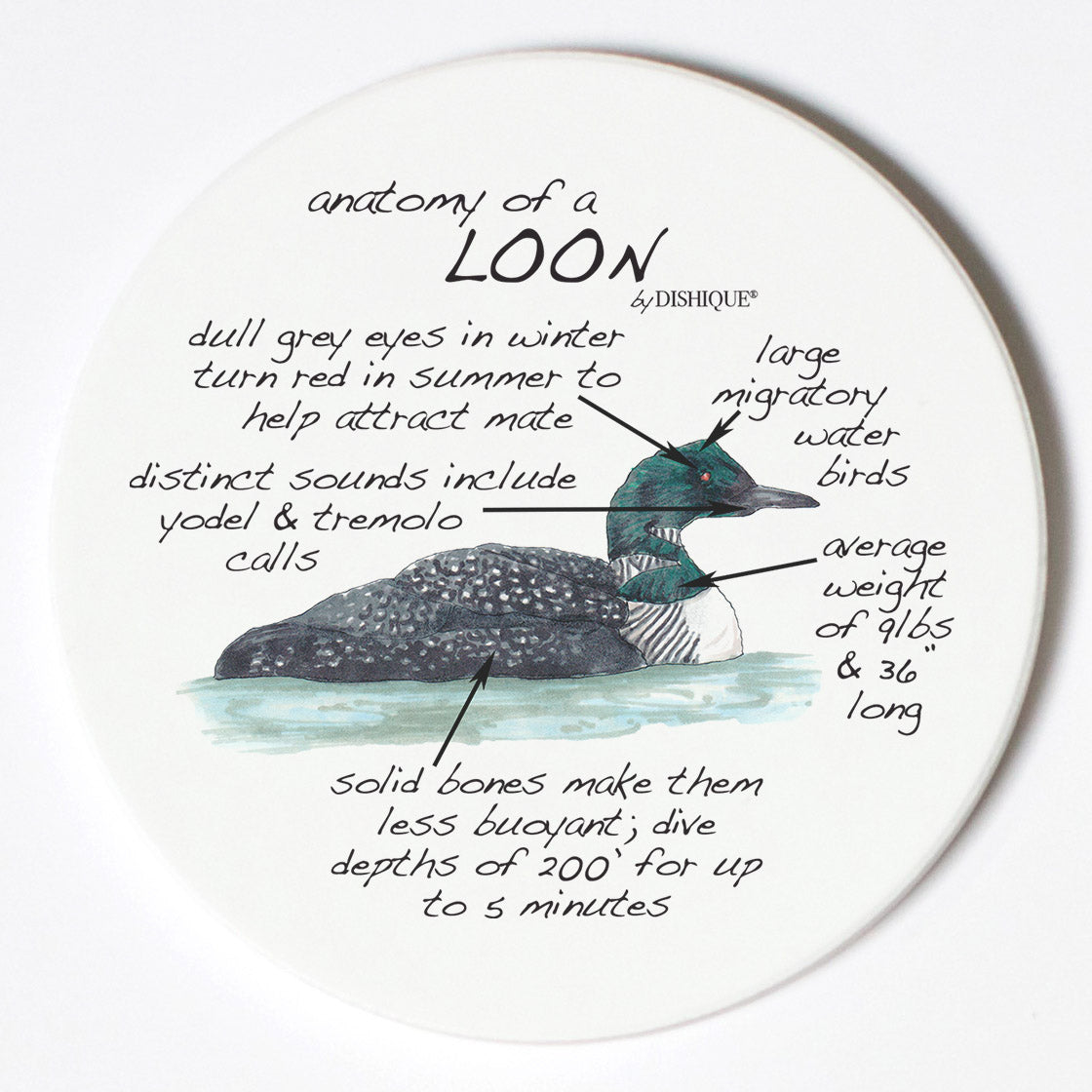 Individual Coasters - Animals & Insects - Loon