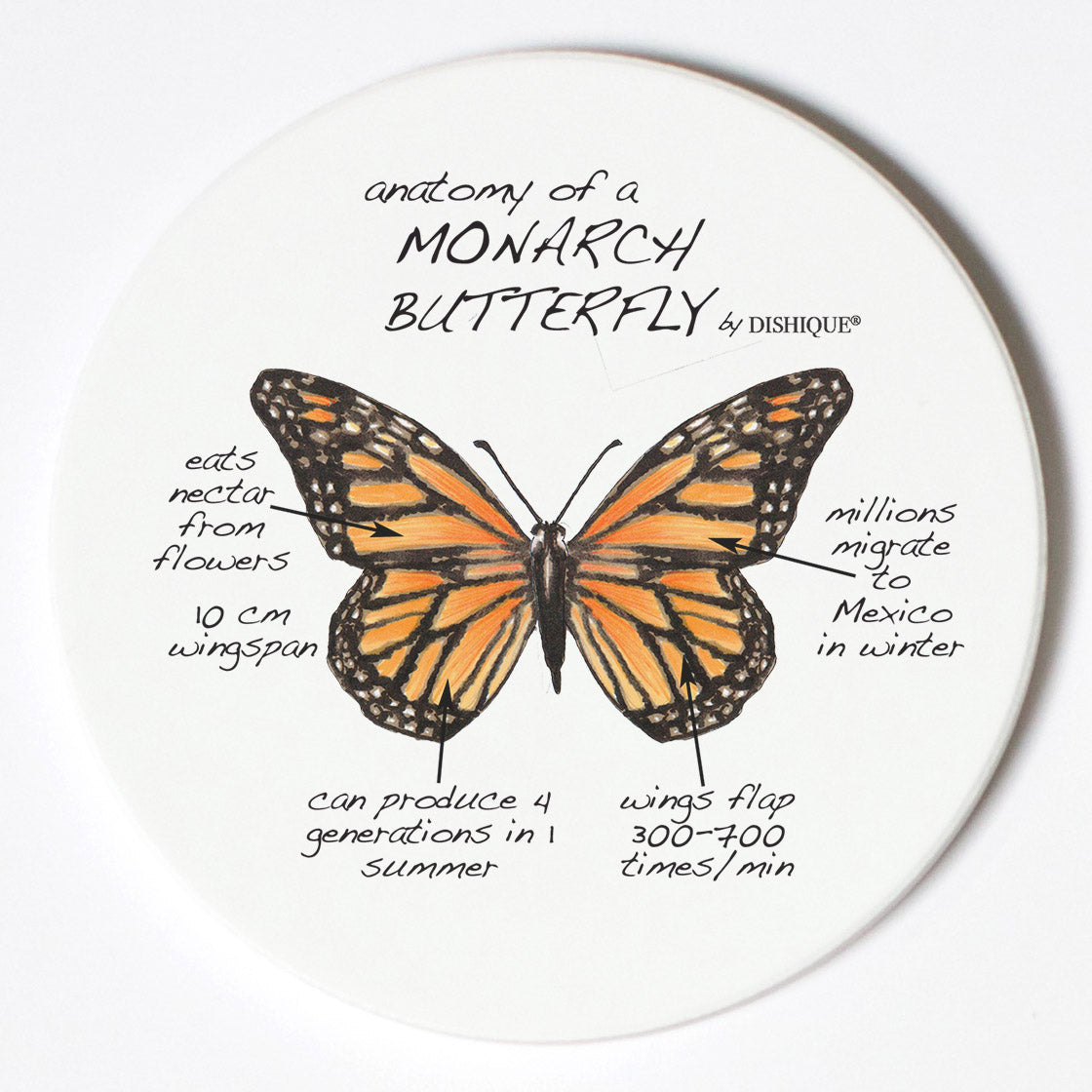 Individual Coasters - Animals & Insects - Monarch Butterfly