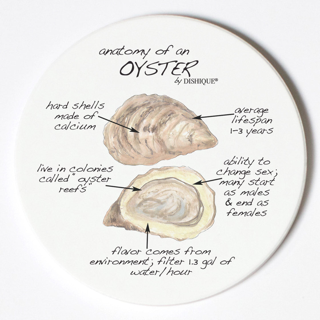 Individual Coasters - Animals & Insects - Oyster