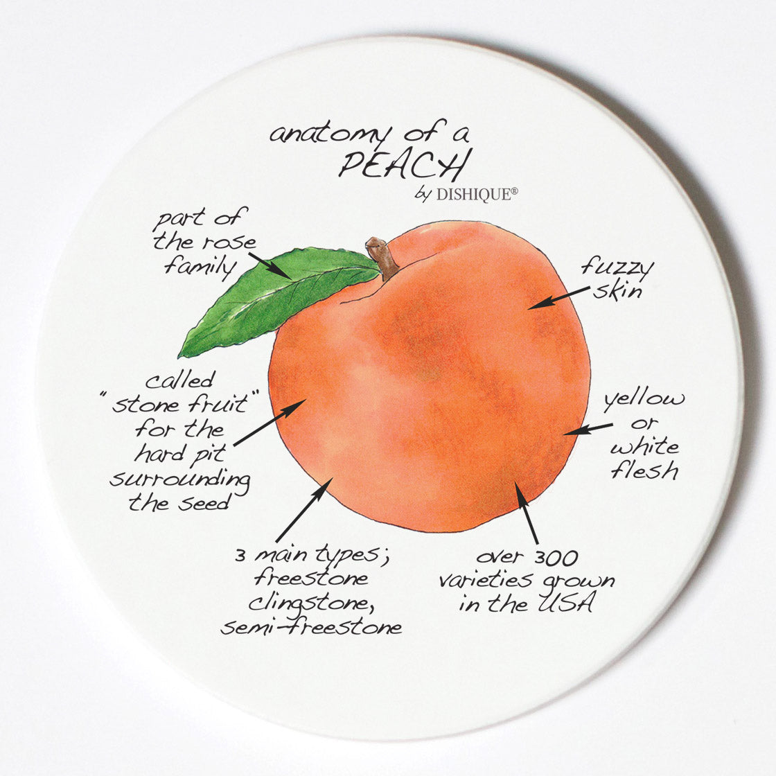Individual Coasters - Food & Drinks - Peach