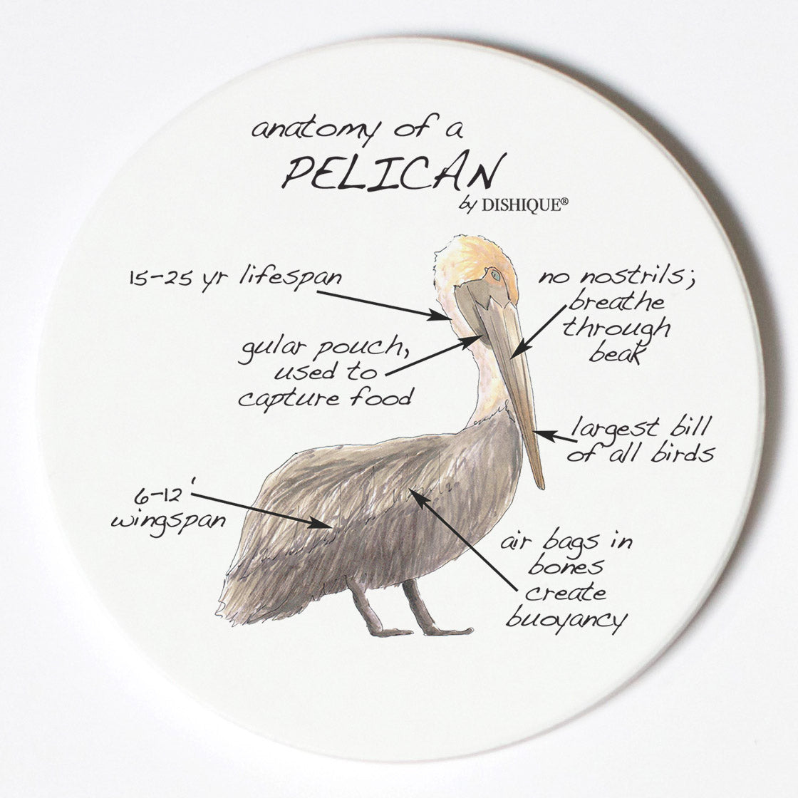 Individual Coasters - Animals & Insects - Pelican
