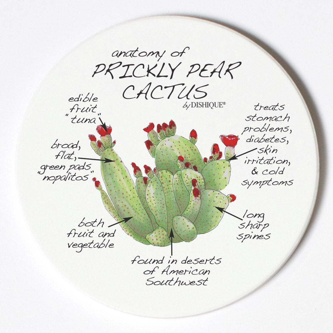 Individual Coasters - Plants - Prickly Pear