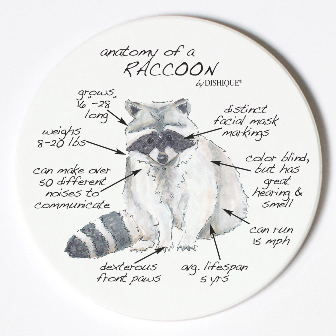 Individual Coasters - Animals & Insects - Raccoon
