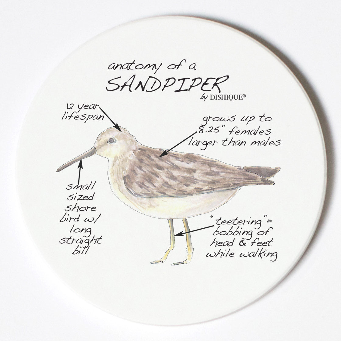 Individual Coasters - Animals & Insects - Sandpiper