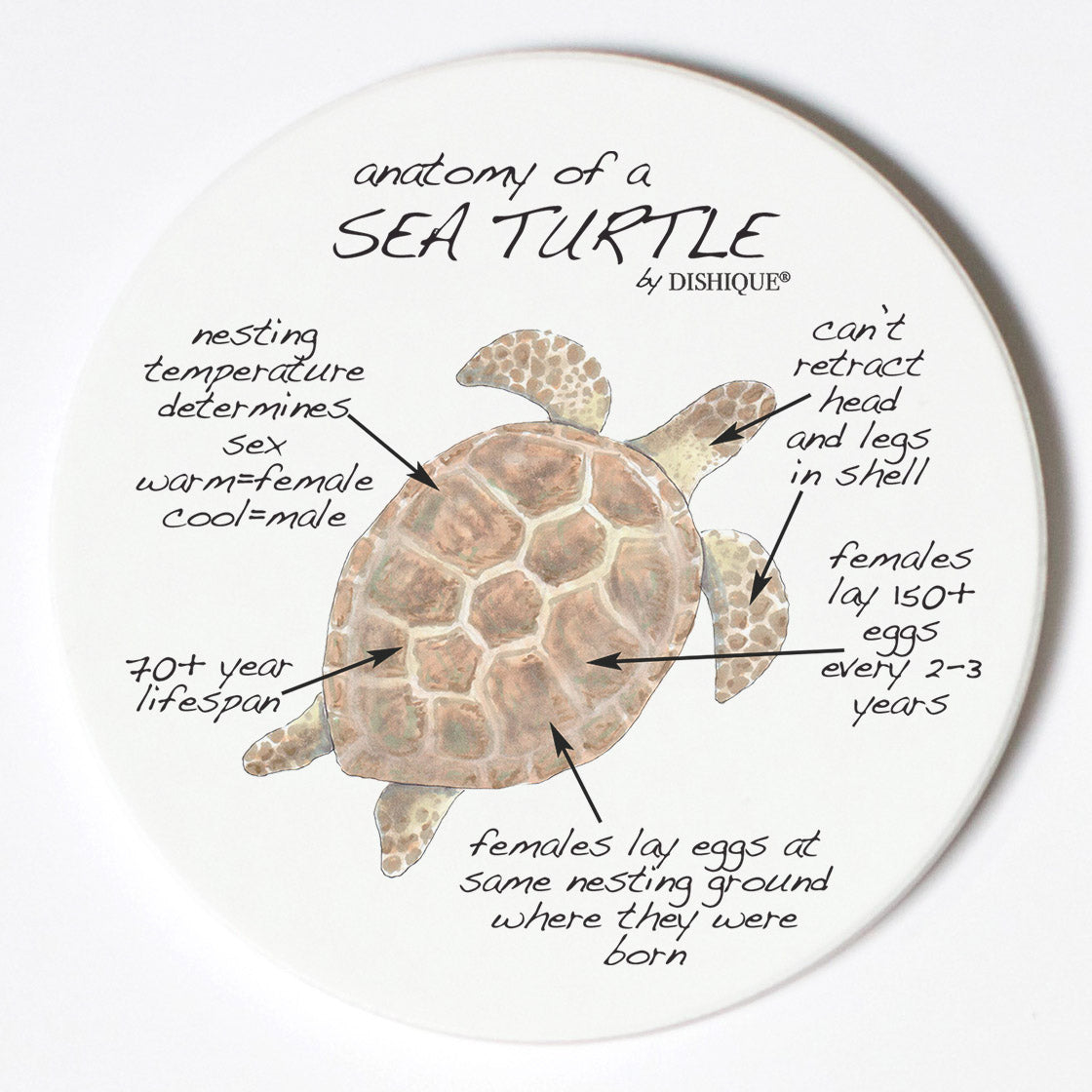 Individual Coasters - Animals & Insects - Sea Turtle