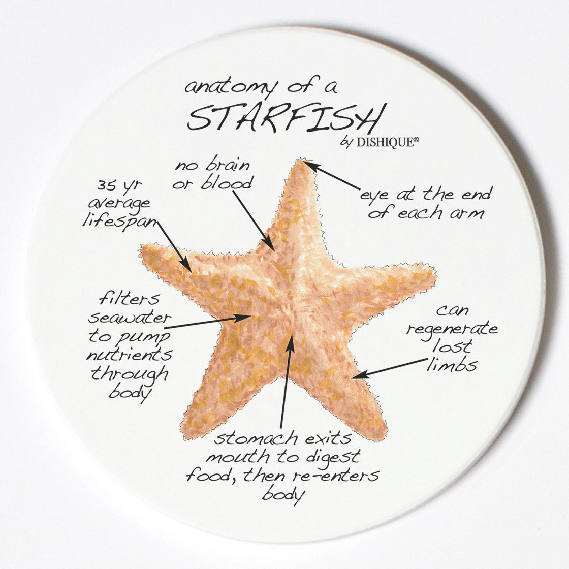 Individual Coasters - Animals & Insects - Starfish