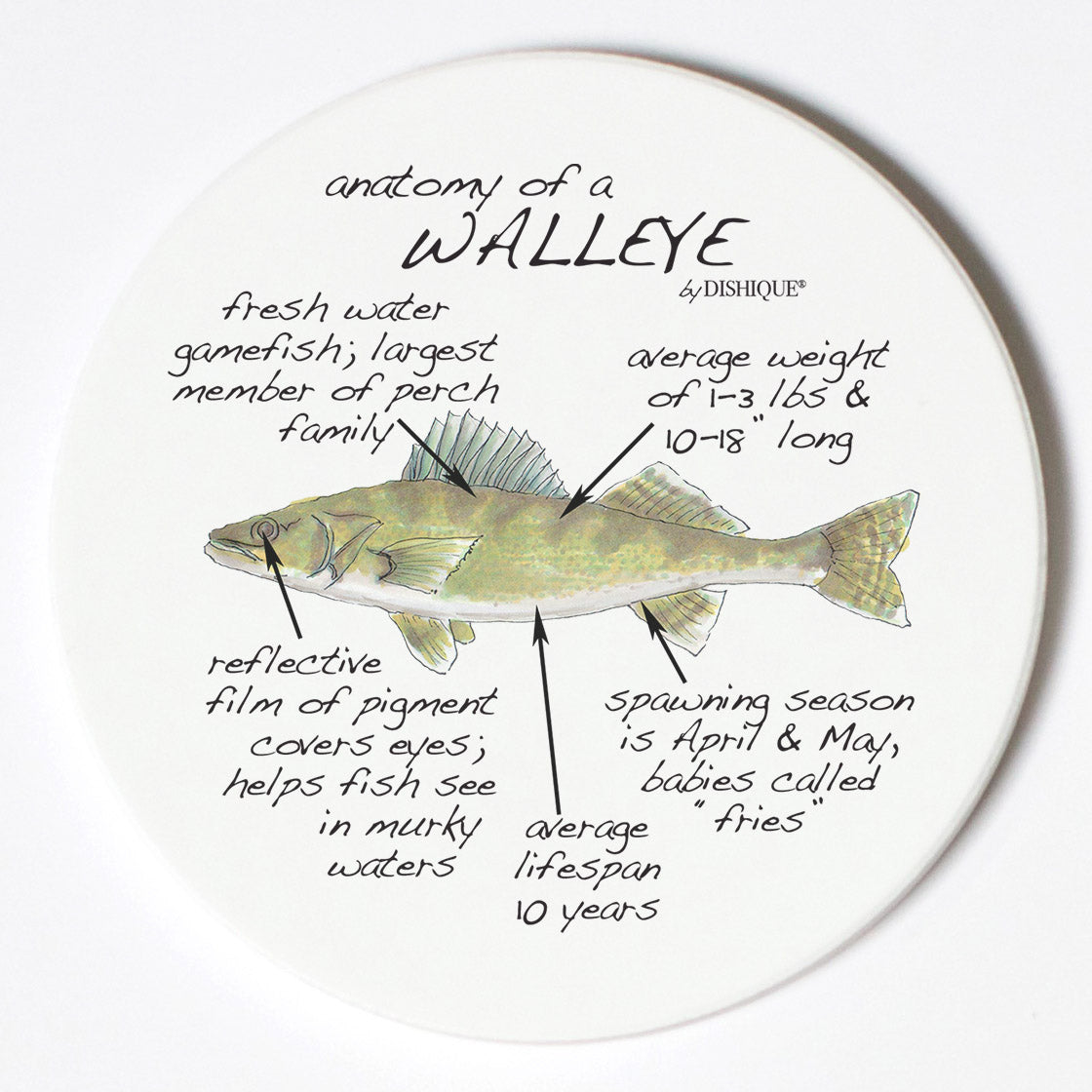 Individual Coasters - Animals & Insects - Walleye