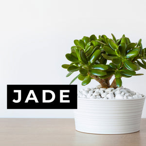 Jade Candle