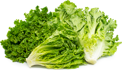 Green Leaf Lettuce - 1 Bunch - Grateful Produce Box