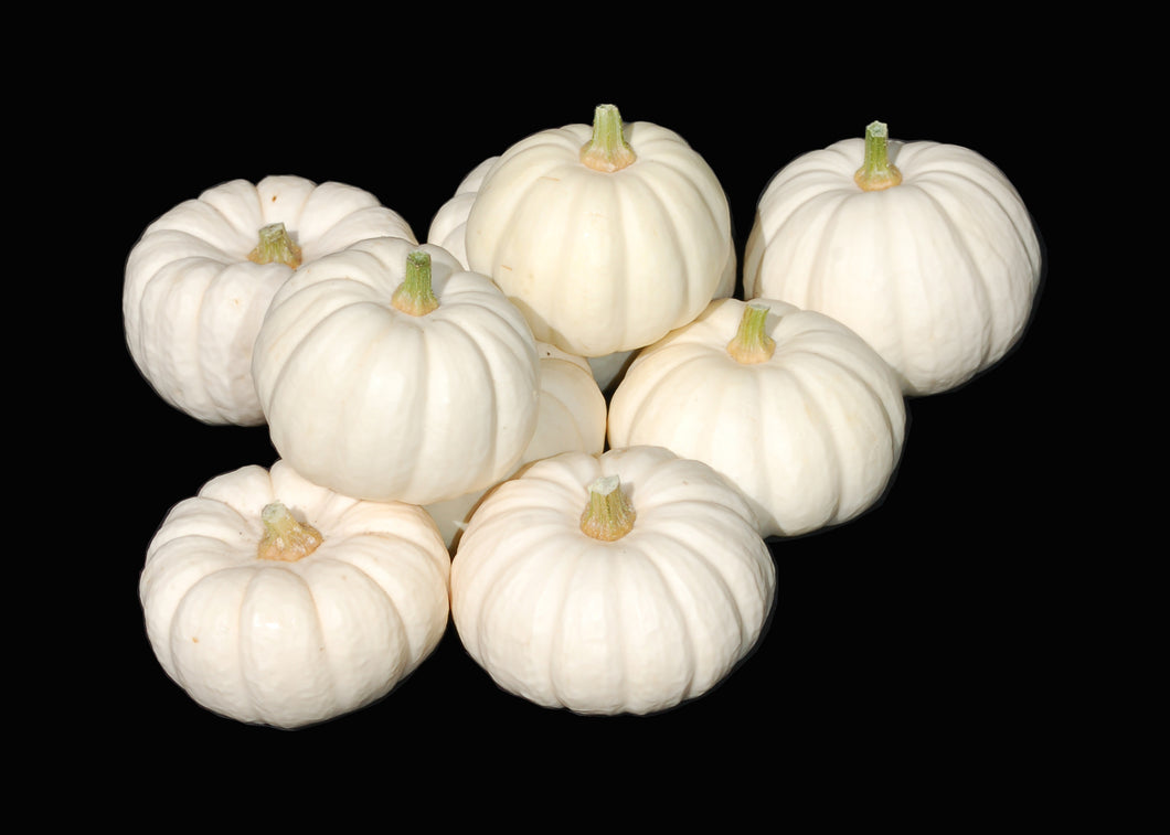 Mini White Pumpkin - 1 Each - Grateful Produce Box
