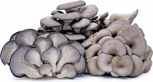 Oyster Mushrooms - 5 lbs. - Grateful Produce Box