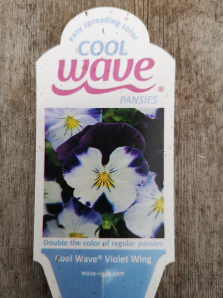 Pansy Cool Wave Violet Wing