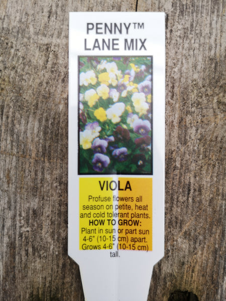 Viola Penny Lane Mix Pack
