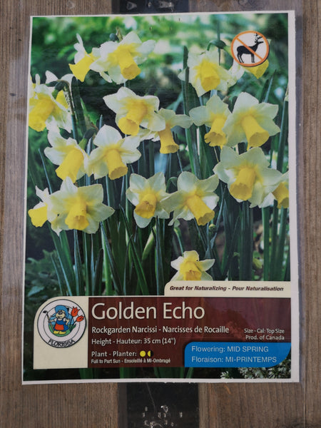 Daffoldil Golden Echo
