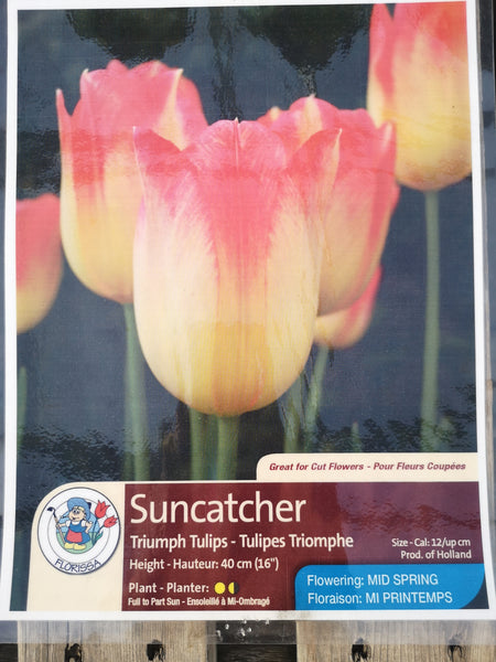 Tulips Suncatcher