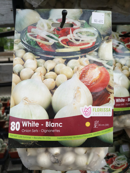 White Onion Set