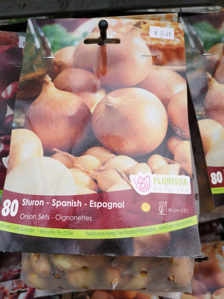 Spanish Onion Set