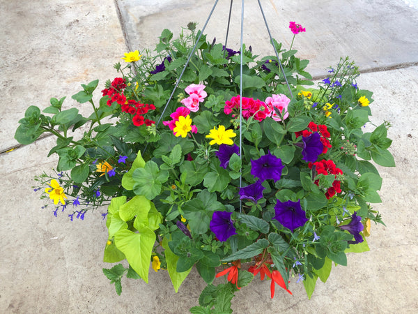 "16"" Mixed Fibre Basket for Sun"